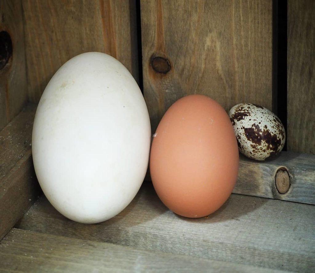 cb080ea57ac Goose Eggs back in the Farm Shop! - Blackwells Farm Shop